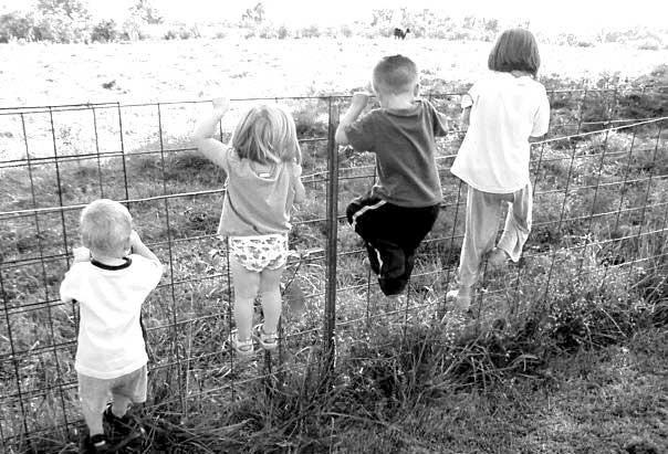 kids-on-fence